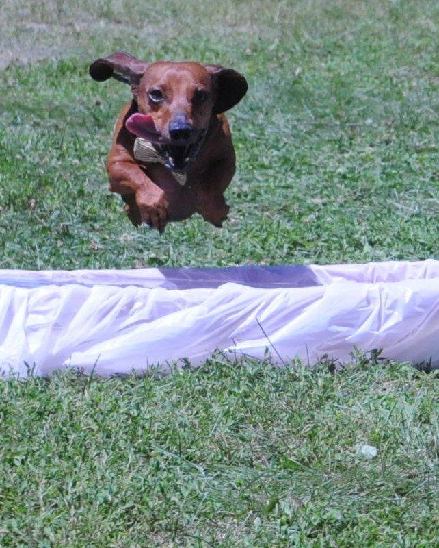 Bavarian Blast Puppy Race